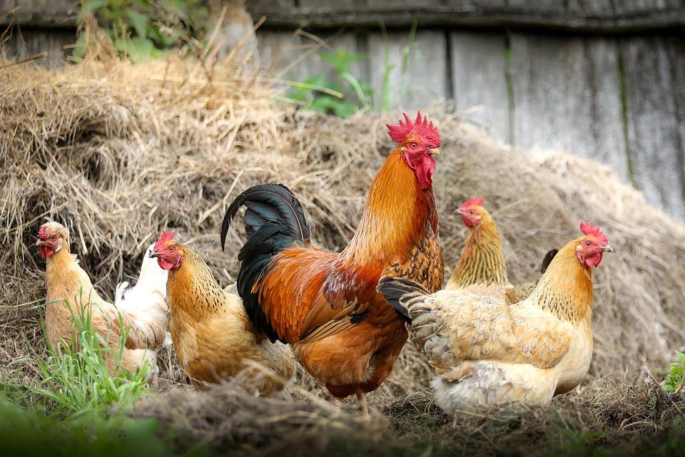 Was hilft gegen Hühneraugen?